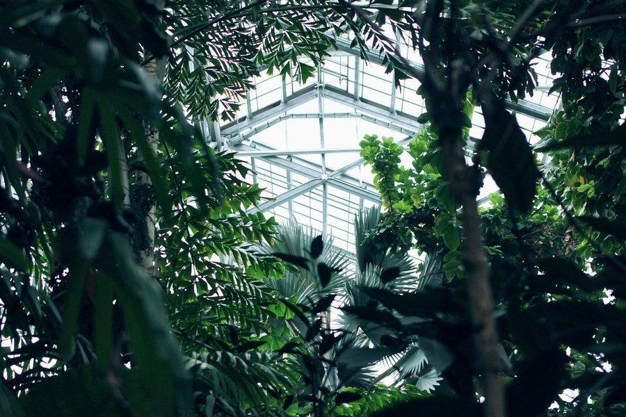 Las 5 Plantas De Interior Más Resistentes Plantas