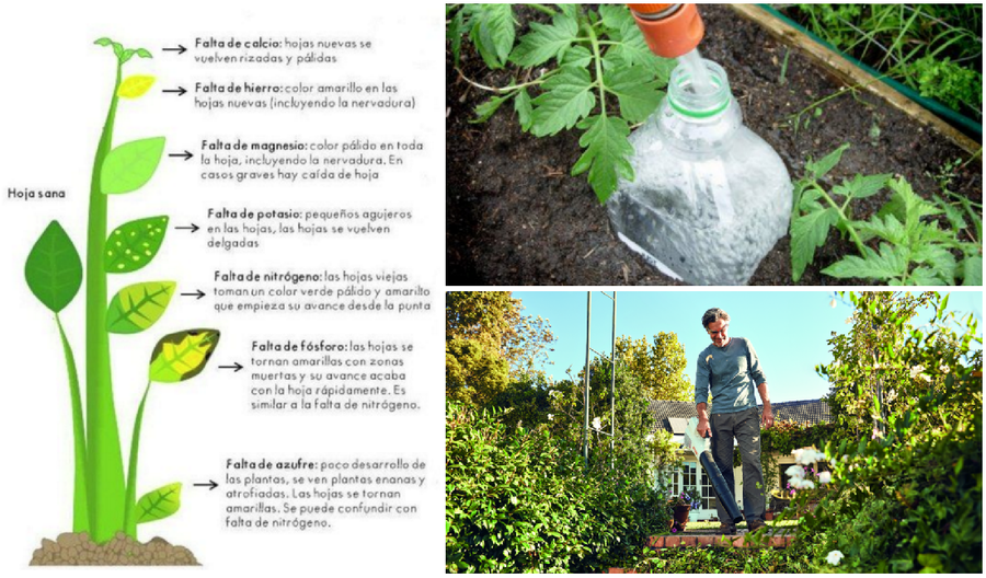 Tareas de jardineria - Tareas de jardineria ...