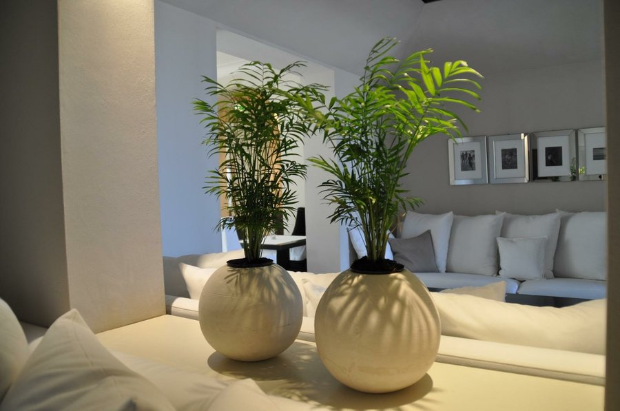 Plantas en la oficina y sus beneficios asegurados plantas for Plantas para oficina