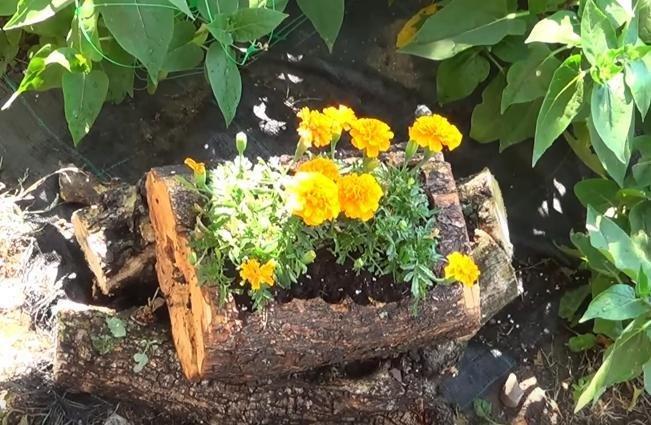 Cmo hacer una jardinera con un tronco de rbol y 10 ideas ms