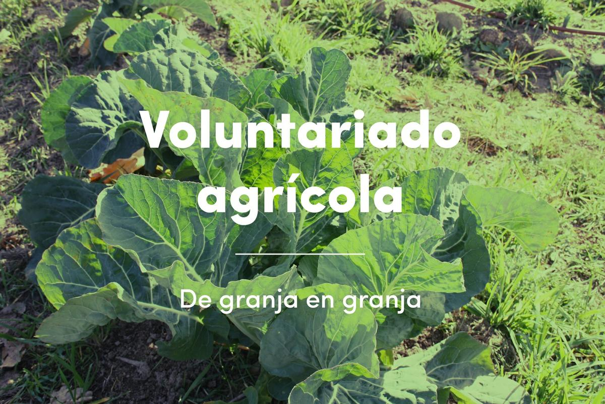 voluntariado-agricola-green-way-life-guille