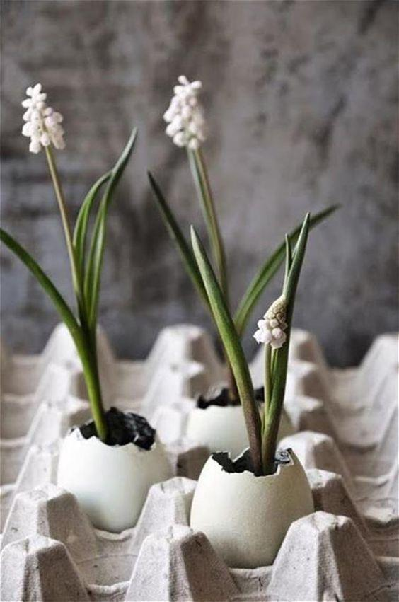 white grape hyacinths in eggs