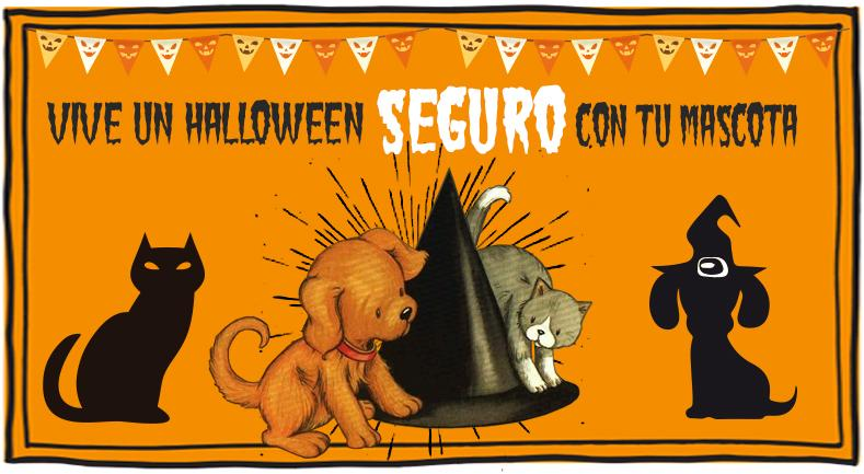 5 Tips para disfrutar con tu mascota en Halloween | Best for Pets