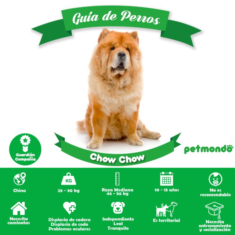 perro chow chow petmondo international chow chow