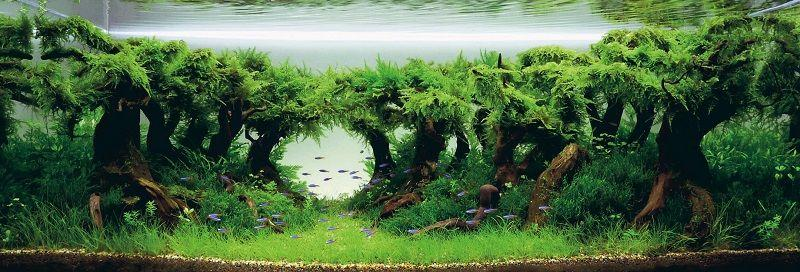 bosque de aquascaping