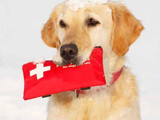 After Hours Emergency Pet Care | Vestal & Johnson City, NY ...