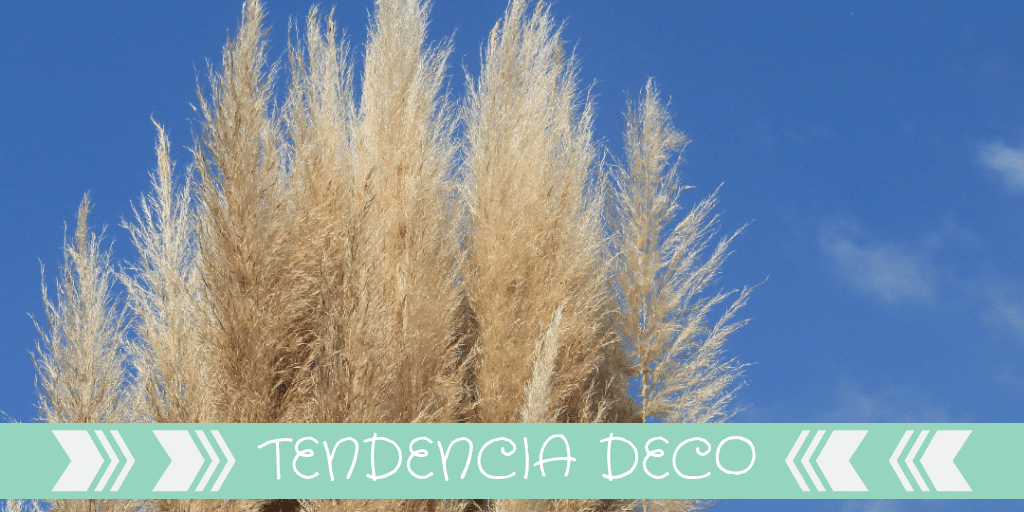 pampa-grass-decoracion