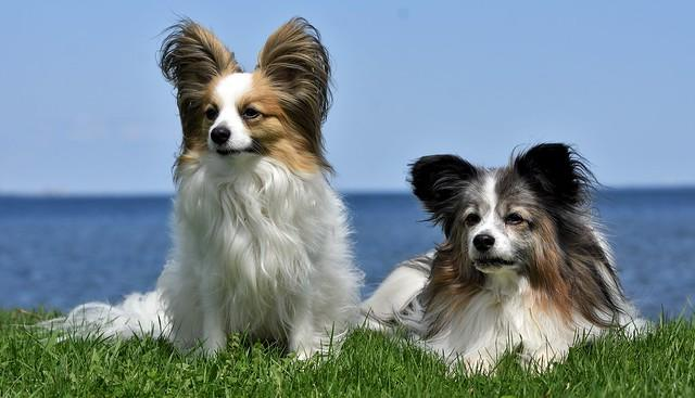 2 papillon en cesped y playa