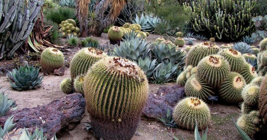 10 Tipos De Jardin Y Sus Caracteristicas Plantas