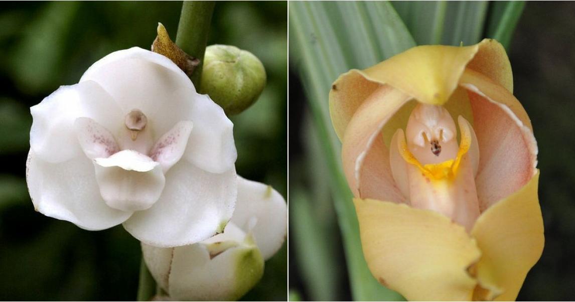 Las 5 Flores Con Formas Mas Raras Del Mundo Plantas