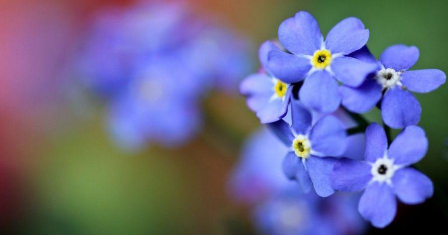 Tareas de julio para tus plantas plantas - Plantas para arriates ...