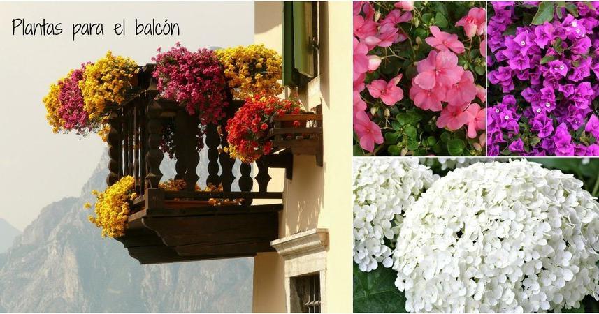 Plantas para terrazas con mucho sol for Arboles para balcones y terrazas
