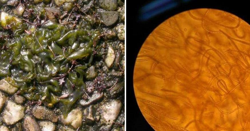 ¿Qué es esta gelatina viscosa que aparece o puede aparecer en mi jardín?