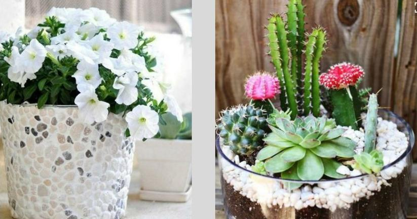 Ideas para jardines pequenos for Como decorar mi living con poca plata