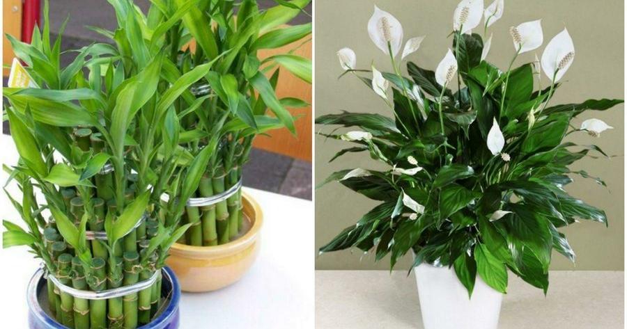 Ideas de plantas for Plantas ornamentales para interiores