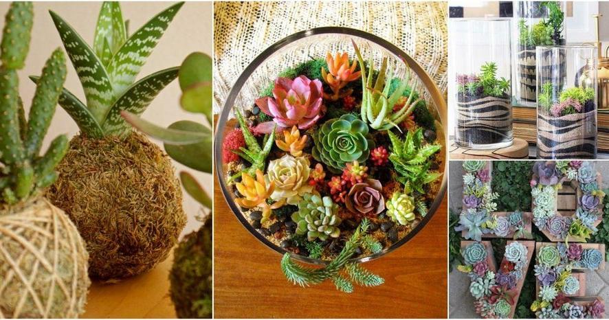 Ideas de plantas for Arboles florales para jardin