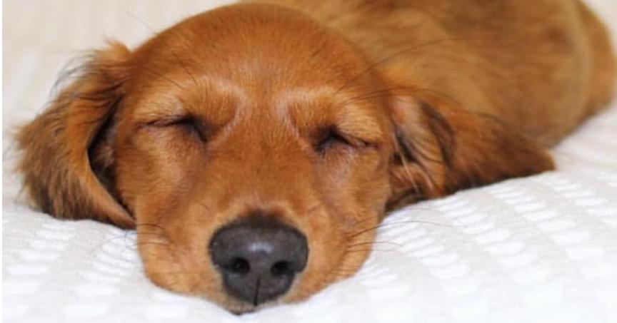 seguro de gastos medicos para mascotas