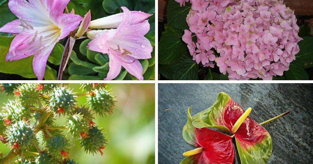 10 plantas muy venenosas plantas - Plantas venenosas de interior ...