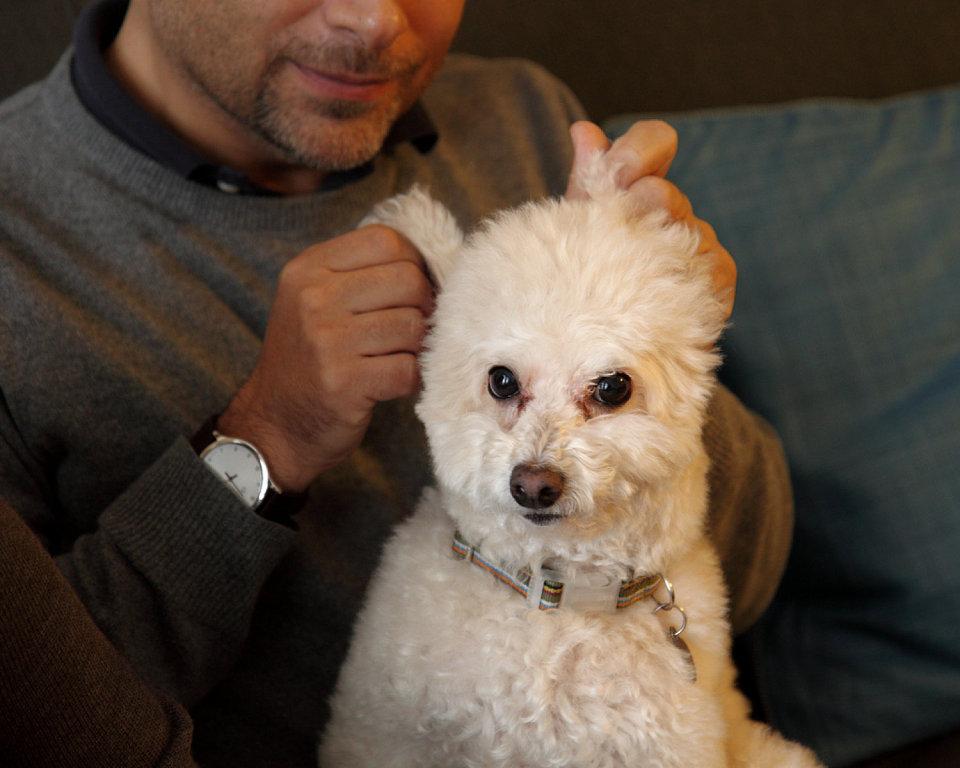 Cómo curar la infección de levadura de perro en el oído