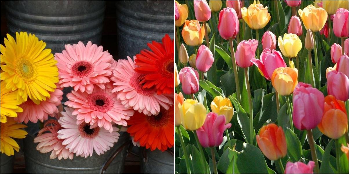 Cuantos Tipos De Flores Existen Plantas