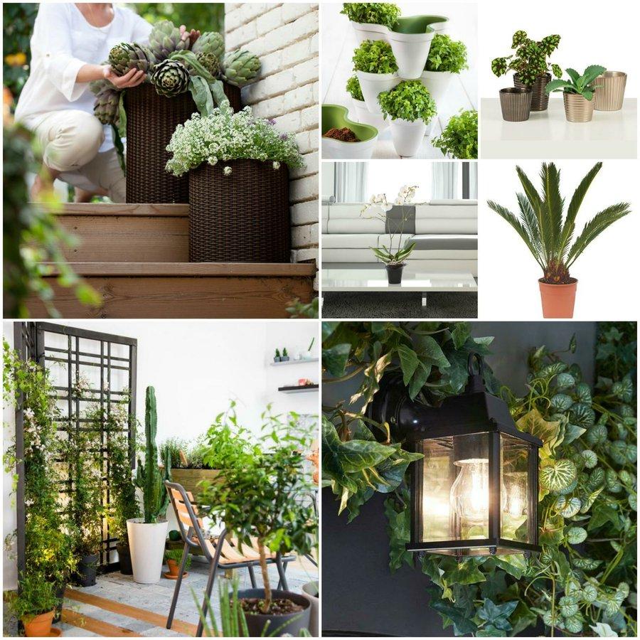 En Leroy Merlin Encontraréis Todo Lo Necesario Para Crear Un Jardín Vertical  A Partir De Plantas Pequeñas ...