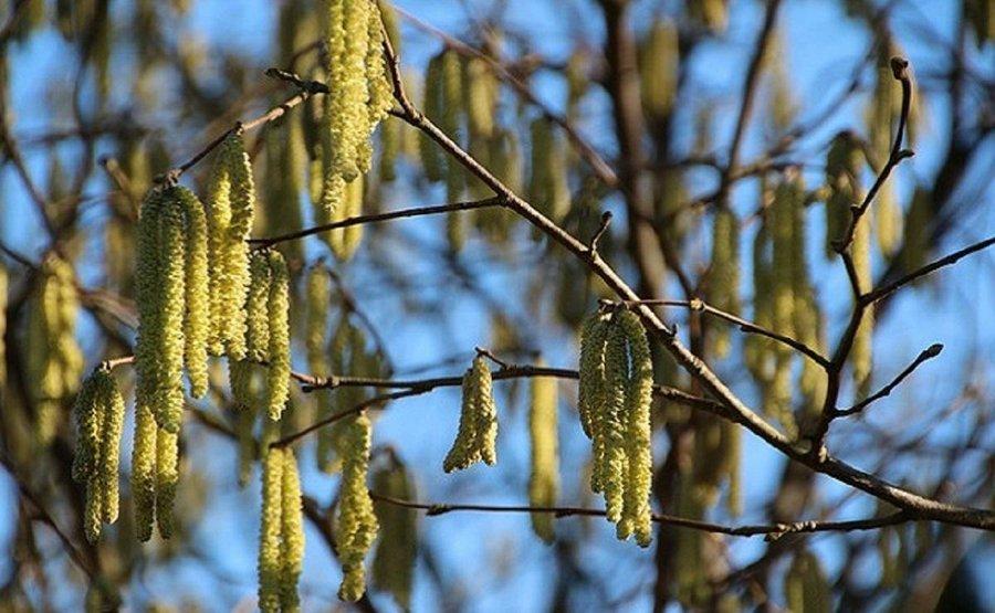 Fotos de rboles de hoja perenne plantas for Ver fotos de arboles de hoja perenne