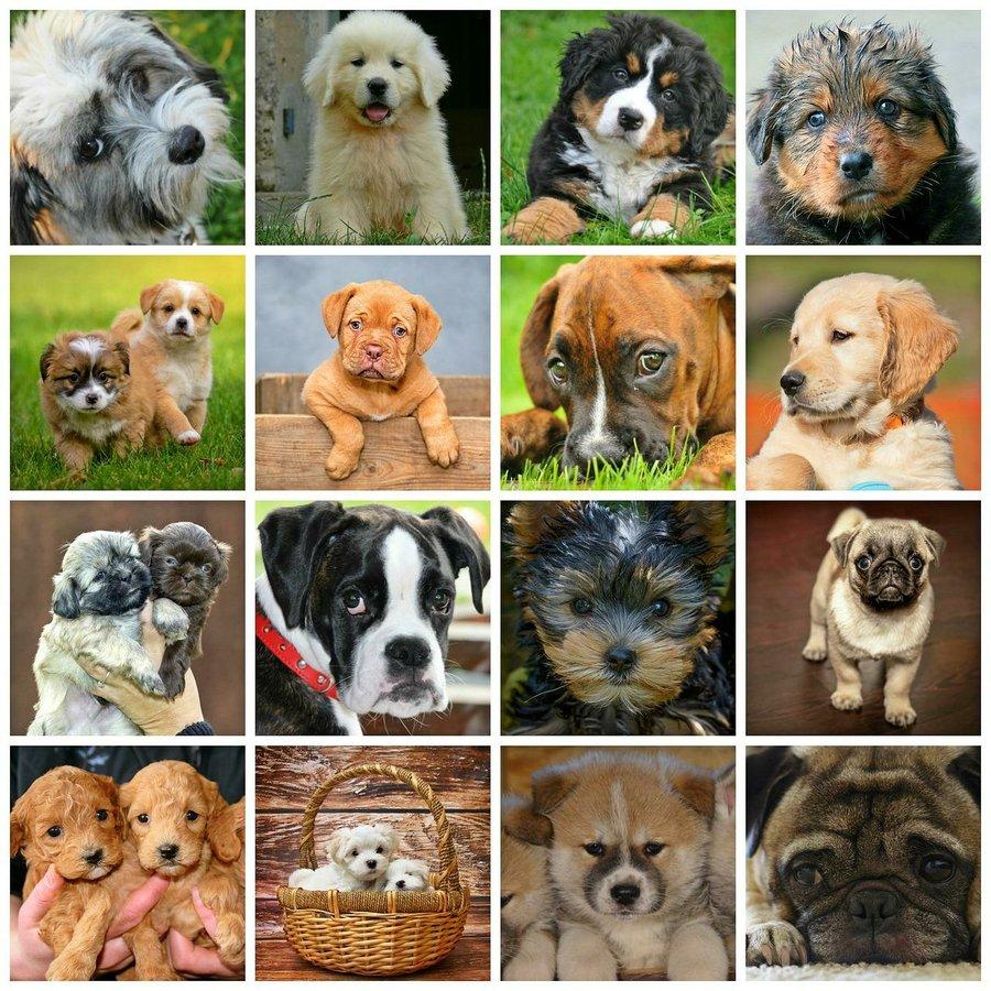 Dog Breeds Pet Planet