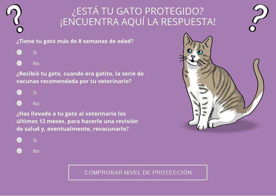 Vacunas Gatos Calendario.Protege A Tu Gato Le Han Puesto Las Vacunas De Refuerzo