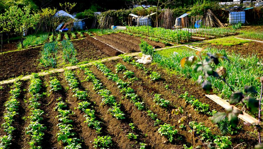 Descubre cuál es el huerto perfecto para tu hogar | Plantas