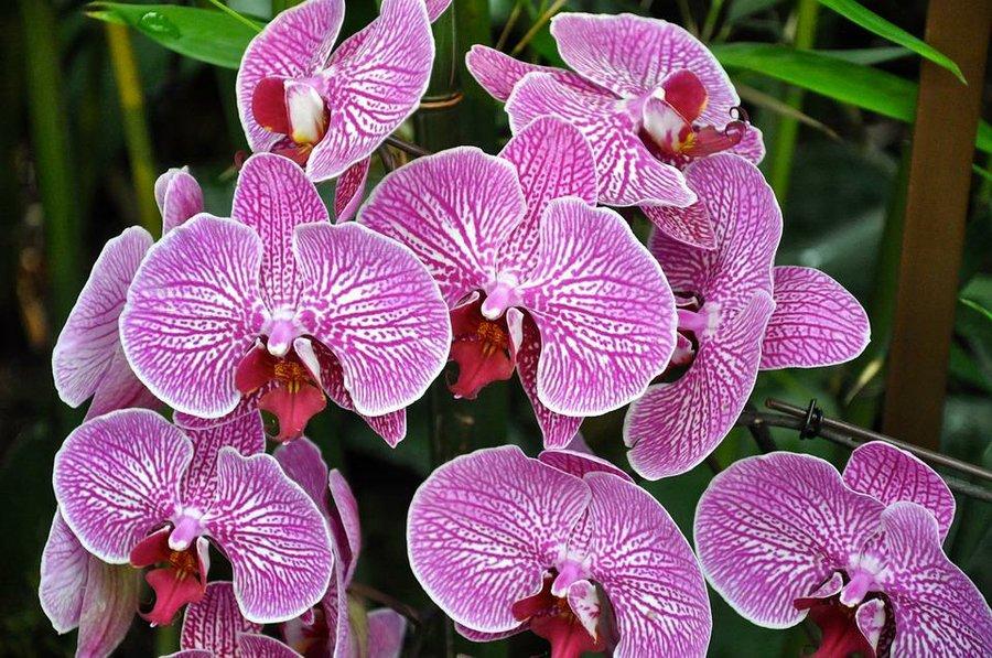 Guia Basica De Cuidados Para Tu Primera Orquidea Plantas - Cuidados-de-la-orqudea
