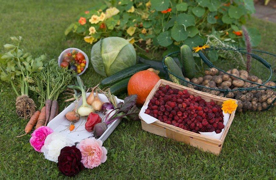 las 5 mejores hortalizas para tu primer huerto urbano