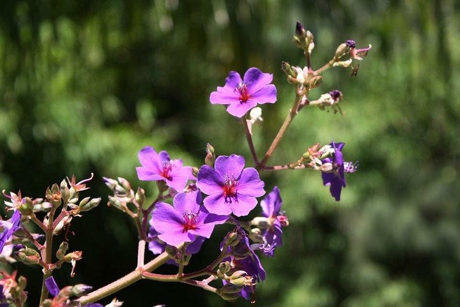 Ideas Para Decorar Tu Jardin Con Flores Plantas - Como-decorar-un-jardin-con-plantas-y-flores
