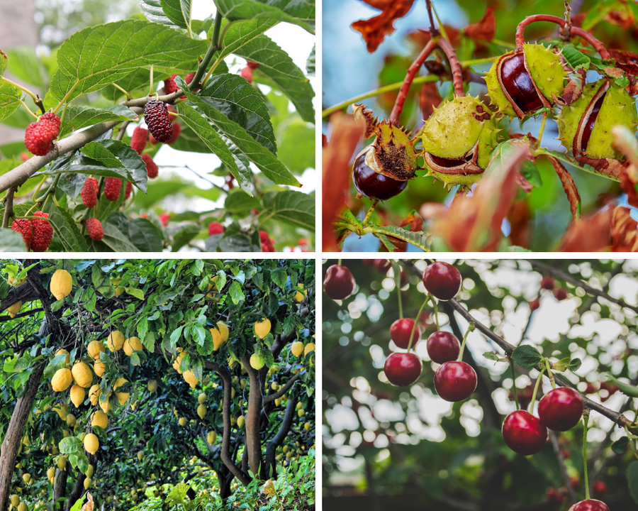5 frutales de r pido crecimiento plantas for Cuales son los tipos de arboles