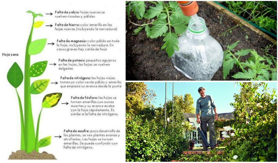 Cuidados plantas jardineras for Trucos jardineria