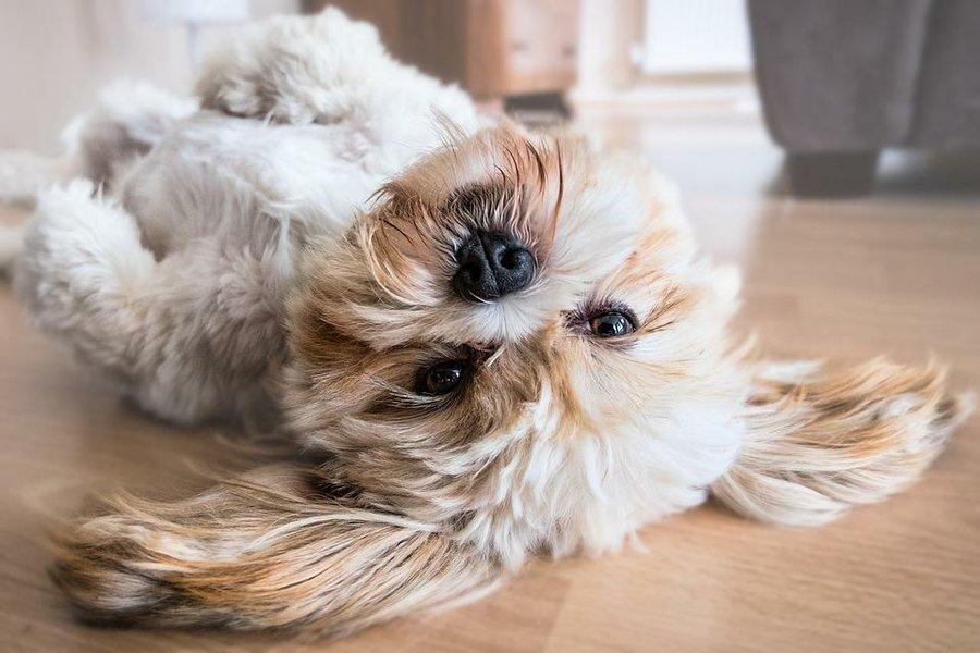 20 ideas geniales para decorar la casa de tu perro mascotas - 20 ideas geniales para organizar tu casa ...