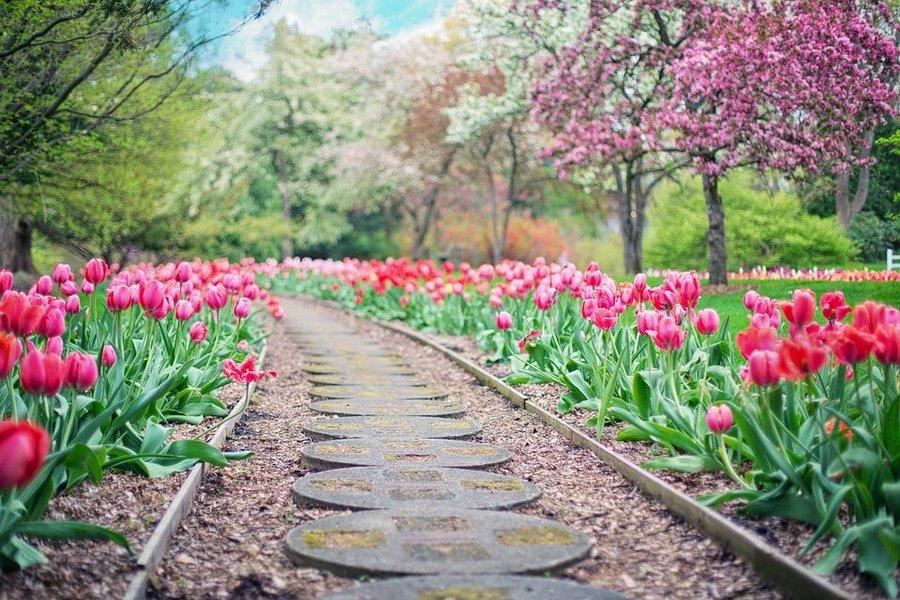 ideas para jardin Ideas Para Hacer Caminos En El Jardn Fcilmente Plantas