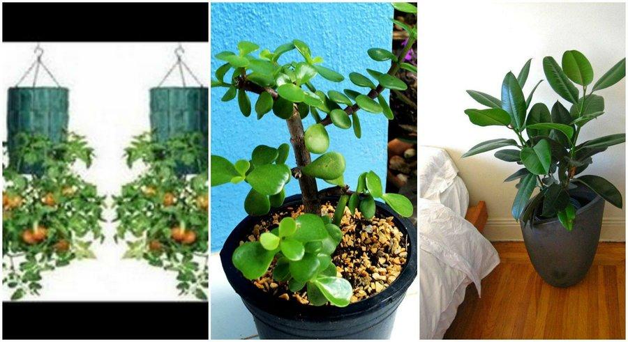 Blog de florencio - Plantas de interior tipos ...
