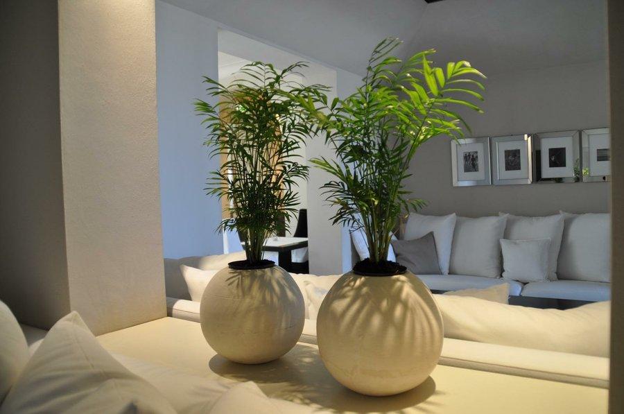 Beneficios de las plantas de interior para tu salud | Plantas