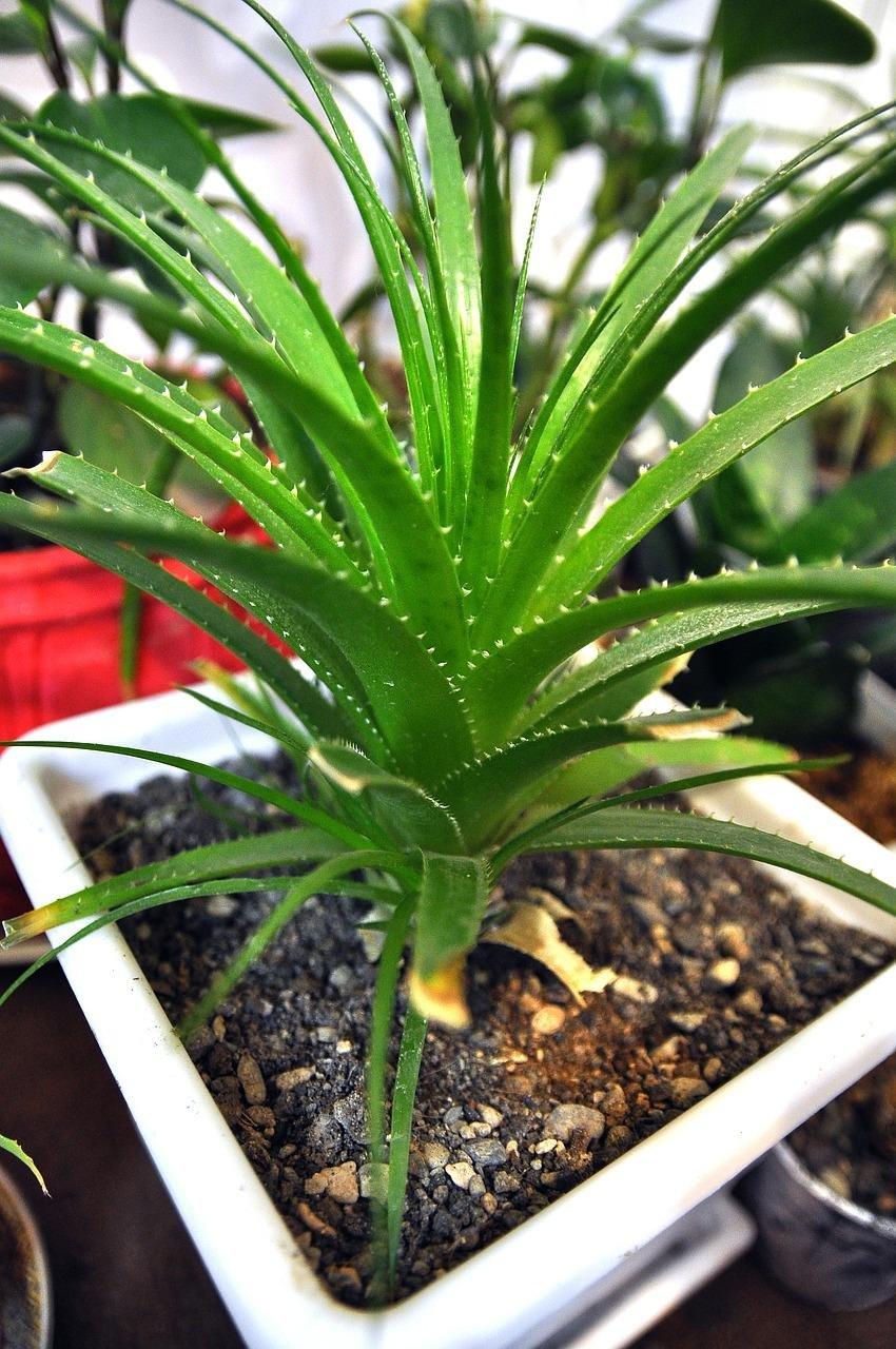 5 plantas de interior f ciles de cuidar plantas for Planta decorativa toxica